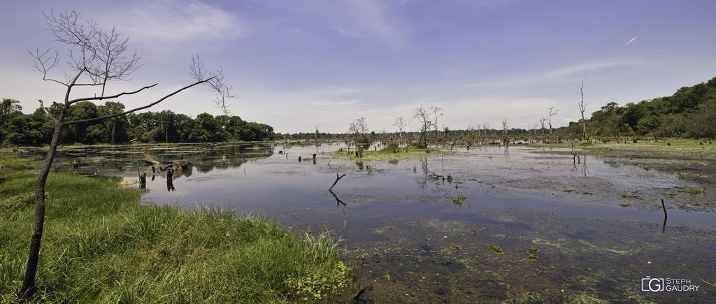 Forêt immergée près de Neak Pean