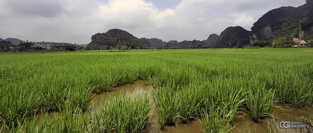 Les rizières de Tam Coc