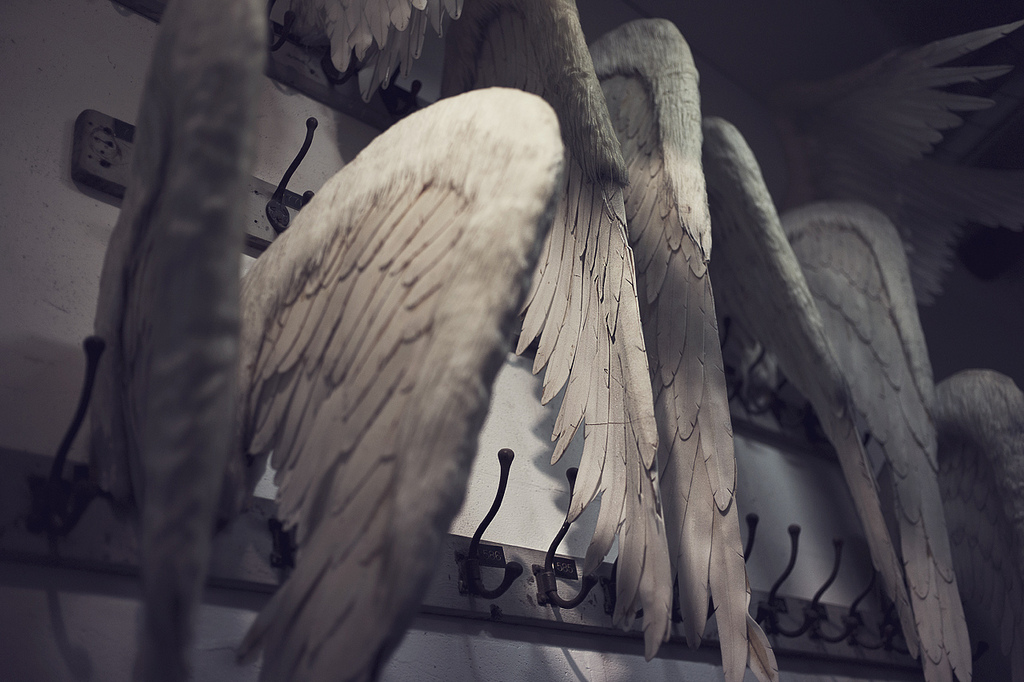 Broken wings waiting donnors - ©Woven Eye